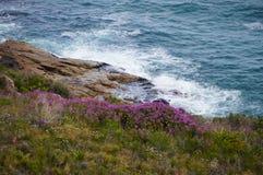 Поле цветка рядом с морем в Кейптауне стоковая фотография