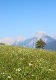 Поле цветка с взглядом над горной цепью Стоковые Фото