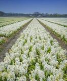 Поле цветка Стоковое фото RF