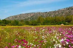 Поле цветка Стоковые Фотографии RF
