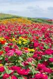 Поле цветков зацветает Стоковые Изображения RF