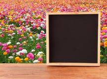 Поле цветков и пустой доски стоковая фотография rf