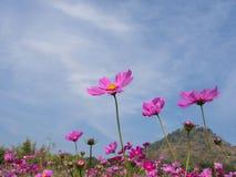 Поле цветков, красивый ландшафт стоковые фотографии rf