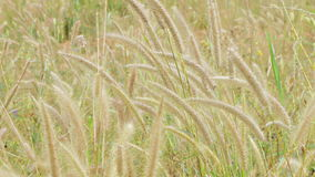 Поле цветков травы акции видеоматериалы
