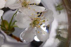 Поле цветков лютика желтое Стоковое фото RF