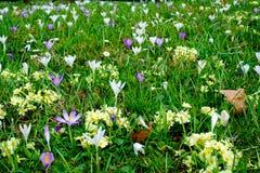 Поле цветков Стоковое фото RF