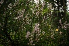 Поле цветков стоковые изображения
