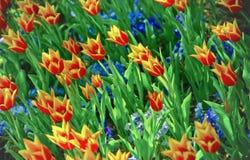 Поле цветков Стоковые Фото