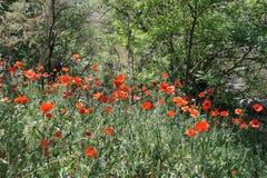 Поле цветков Стоковая Фотография RF