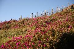 Поле цветков Стоковое Фото