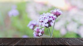 Поле цветков bonariensis вербены & x28; image& x29 нерезкости; с выбранным foc стоковые изображения