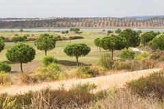 Поле для гольфа в Испании стоковое фото