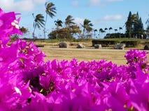Поле для гольфа Гаваи Kai стоковые изображения