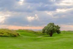 Поле для гольфа с деревом стоковое фото rf