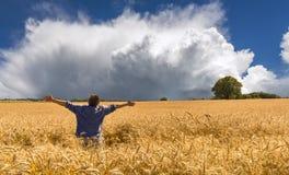 Поле amomg человека пшеничного поля перед грозой стоковая фотография rf