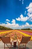 Поле blossoming лютиков сада Стоковые Фото