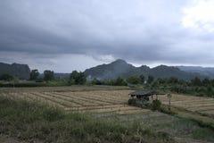 Поле cha чая в Таиланде с подходом к ливня стоковое изображение