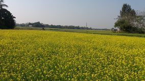 Поле flurocent желтого цвета Стоковое Изображение