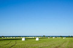 Поле haybales Стоковые Изображения RF