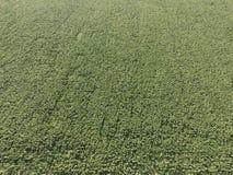поле l солнцецветы Вид с воздуха аграрных полей цветя семя масличной культуры Взгляд сверху стоковое изображение