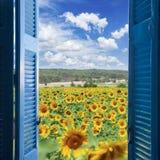 поле l солнцецветы Стоковое фото RF