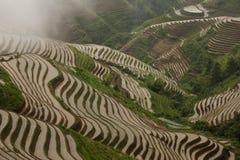 Поле Padi на длинном Jie Стоковое Фото
