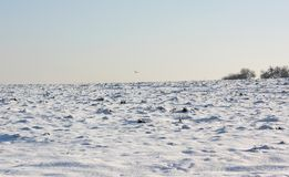 Поле Snowy Стоковые Изображения