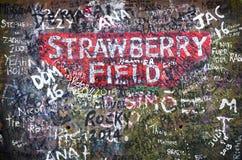 Поле Strawbery стоковое изображение