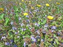 Поле Wildflower весной Стоковая Фотография RF