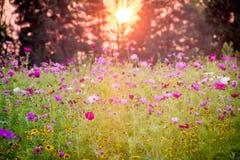 Поле Wildflower на заходе солнца Стоковая Фотография
