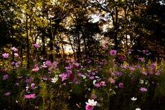 Поле Wildflowers стоковое изображение rf