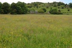 Поле wildflowers, Wetton, Стаффордшир, Англия Стоковое фото RF