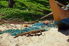 Ползания Varan вдоль пляжа Стоковые Фото