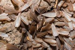 Подземно-минные муравьи стоковое изображение