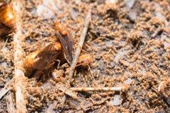 Подземно-минные муравьи стоковые фото
