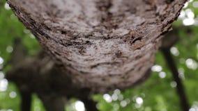 Ползучесть муравьев вдоль дерева сток-видео