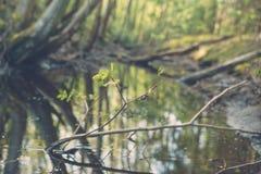 Ползучесть улитки на хворостине против малого пруда в лесе Стоковая Фотография