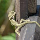 Ползучесть хамелеона на загородке Стоковые Изображения
