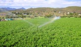 Полив и сельское хозяйство Стоковое Фото