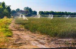Полив культивируемых полей Стоковое Фото