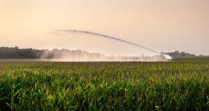Полив на кукурузном поле Стоковое Фото