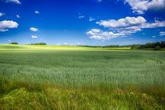 Полив поля с урожаем Стоковое Фото
