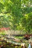Полив сада Стоковые Фотографии RF