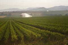 Полив спринклера Auvergne Стоковое Изображение