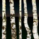 Полигон березы дерева Стоковые Изображения RF