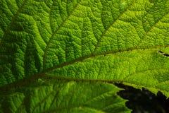 Под листьями Стоковое фото RF