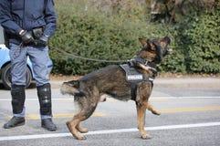 полицейская собака лаяет во время управления анти--терроризма в городе Стоковые Фото