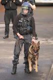 Полицейская собака в действии Стоковое Изображение
