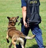 Полиция укомплектовывает личным составом с его собакой Стоковые Фотографии RF