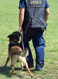 Полиция укомплектовывает личным составом с его собакой Стоковая Фотография RF